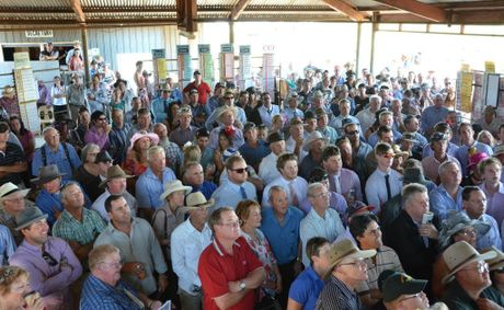BIG EVENT: A crowd of 1000 people headed to the Kumbia Races on Melbourne Cup day. Photo: Kate Benedict / South Burnett Times.