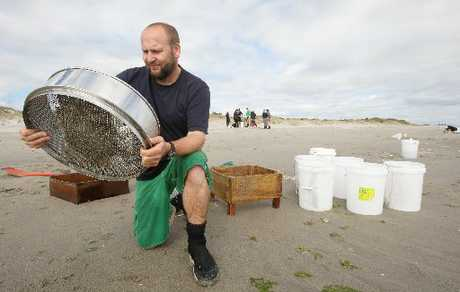 Dave Culliford of the Rena Recovery Project sifts through sand at Papamoa Beach as part of a summer sampling programme measuring the environmental impact of Rena&#39;s oil.