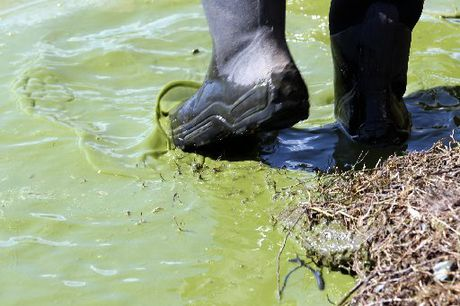 CLEAN GREEN? This photo of algae bloom concentrated around the southern margins of Lake Tutira was snapped in September but the green sludge is likely to remain during summer.