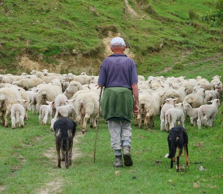 Federated Farmers is hopeful increased lamb production may offset softer international prices.
