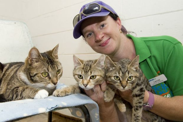 RSPCA shelter manager Cassie Walker plays with a few of the cats looking for new homes.