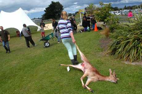 HAUL: A young hunter drags away her game after the Fernridge Kids Hunt weigh-in at the Masterton school on Sunday, which capped a weekend of hunting for almost 200 child entrants in the annual fundraising contest.