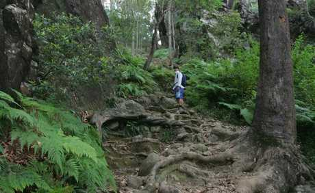 The Mount Ngungun walking track.