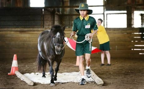 St Brigid's Primary School year 7 student Nattanan Connah taking part in the Equine Learning for Futures program at Palmerston Indoor Arena, Walloon.