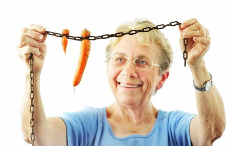STRAY SEEDS: Farmer Betty Keller had some unusual carrots growing in chain links on her property at Lowood.