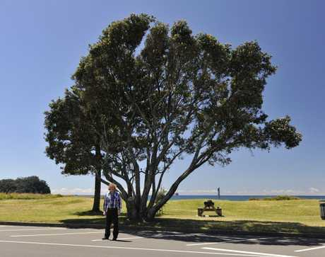 Mount resident Simon Taylor in front of one of the Marine Parade pohutukawa.