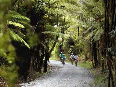 Cyclists on Pou Herenga Tai/Twin Coast Cycle Trail. Photo / Supplied