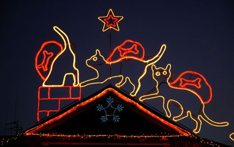 Part of the Christmas lights display at Welcome Bay Vets on Welcome Bay Road.