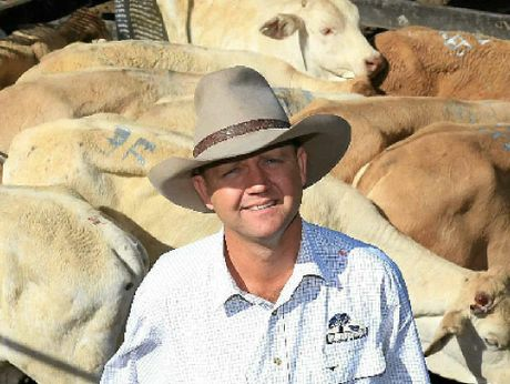 SALE SMILE: Burnett Livestock and Realty's Lance Whitaker with a pen of Charbray weaner steers on account of G and H Young, Eidsvold. The steers sold for 218.2c/kg or $479 a head.
