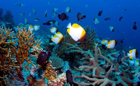 The Coral Sea Marine Park is part of a network of marine reserves around Australia and the stakes are high on both sides of the fishing debate.