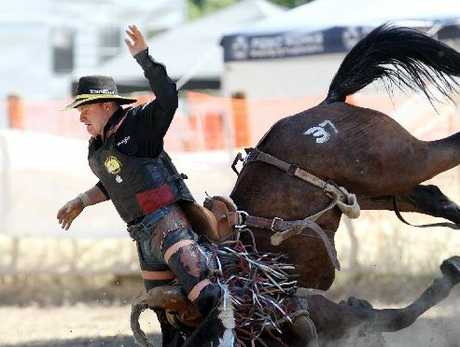 CRASH LANDING: Rodeo action looks likely to proceed in Hamilton despite a petition and calls from Save Animals from Exploitation supporters.