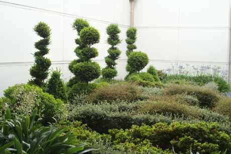 SCULPTED: Topiary designed to represent children in the Wairarapa Hospital entrance garden.