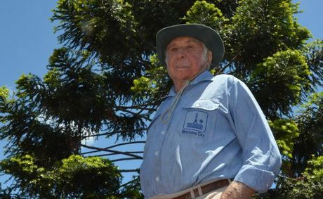 STRIKE: Yarraman farmer Mac Norgaard was stunned to see find two cows had been struck by lightning during last weekends thunderstorms.