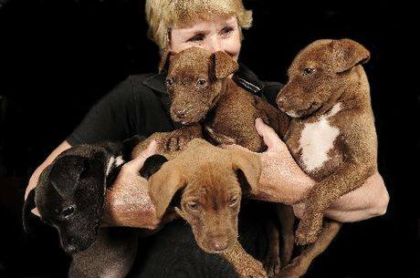Foster parent Jackie Baxendine has opened her semi-rural home to four puppies found abandoned and dumped inside a rubbish bin at Maketu.