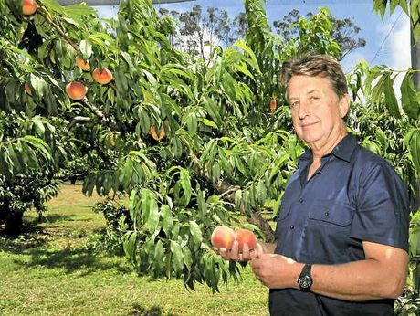 SPRAY BAN: Mark Napper hopes to negotiate the restricted application rate of Fenthion.