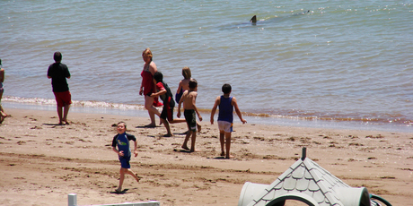 A group of children were happily playing in the water at Paihia, cooling off from the hot sun - then someone yelled: &quot;Shark!&quot;