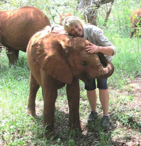 ELEPHANT CUDDLE: Girraween National Park ranger Jolene McLellan had the opportunity to get up close to baby elephant Kithaka while she was in Africa recently. Photo Contributed