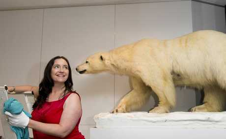 Cobb+Co Museum deputy director Debbie Bailey with a polar bear from the &quot;What do you collect&quot; exhibition. 