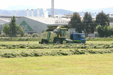 SLOW GROWTH: Silage being made in Waingawa. Predictions are for a dry summer.