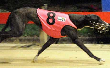 TOP FORM: Proper Lilly takes the win at Lismore on Tuesday night.