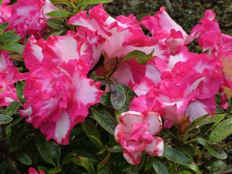 To keep you on your toes, azaleas and blueberries, among many other plants, prefer acid soil.