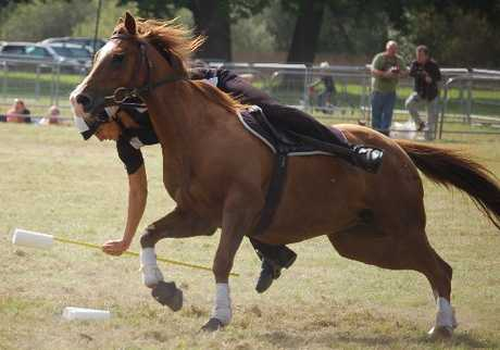 BRING IT ON: Northlander Dee Cherrington has been selected to represent New Zealand at the 2013 Mounted Games World Team Championships.