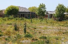 Vacant sites in the red zone are quickly becoming overgrown with vegetation.