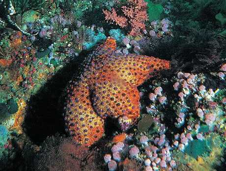 If you're looking for superb diving opportunities in New Zealand, you cannot go past the Poor Knights Islands