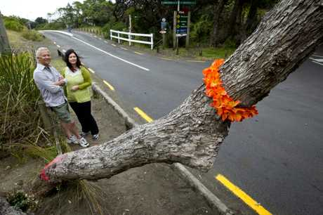 Former Piha residents Warwick and Kath Buckton look at the pohutukawa tree on Beach Valley Rd, Piha, which has been attacked with a saw.