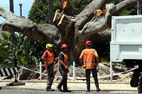 TIMBER: Contractors cutting down the old Morton Bay fig at Clive Square. PHOTO/PAUL TAYLOR HBT124554-02