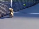 Squirrel interrupts U.S. Open