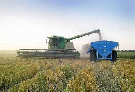 TOP CROP: The Australian winter crop production is forecast to be about 35.1 million tonnes in 2012–13.