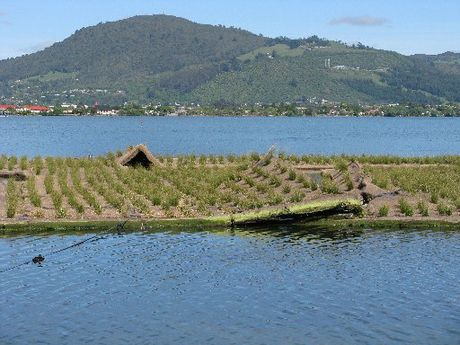 Rotorua's football field-sized floating wetland has been damaged after a rope holding it in place broke last Friday.