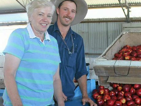 FRESH HARVEST: Julie Pratt and son Nigel examine the freshly picked nectarines that arrived in the packing shed.