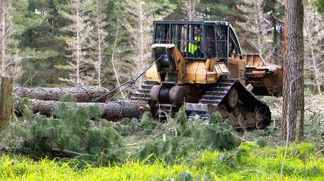 Many forestry workers are injured on the job.