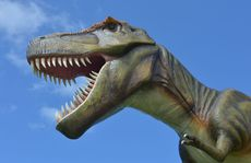 Jeff the dinosaur at Clive Palmer's Coolum resort.