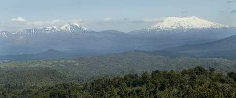 Mt Tongariro, Mt Ngauruhoe and Mt Ruapehu, as seen from the Pureora Forest Park.