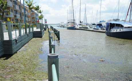 fraser coast residents encouraged to photograph king tide. Black Bedroom Furniture Sets. Home Design Ideas