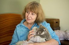 Clare Gover has rescued hundreds of Koalas over the years as a volunteer wildlife carer .
