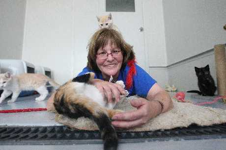 CATS GALORE: Rotorua SPCA animal supervisor Karen Rolfe with some of the many kittens and cats dropped off at the Old Taupo Rd animal shelter in the past week by thoughtless owners dumping them in the lead-up to Christmas.