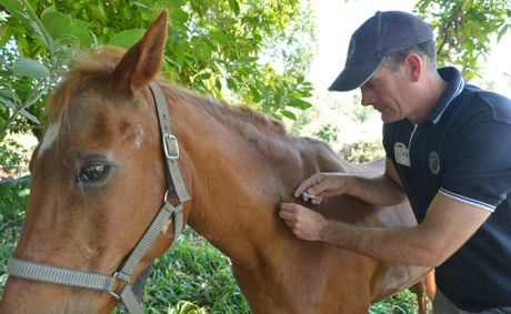 The Hendra vaccine, Equivac HeV, was made available to all horse owners in Queensland in November.