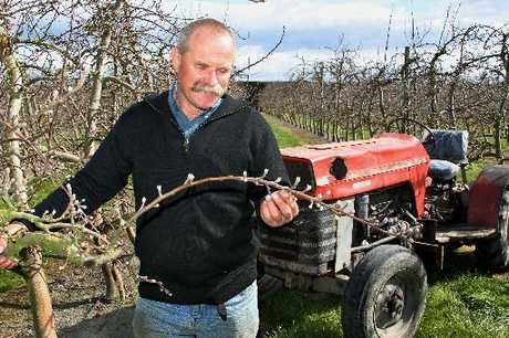 DRY RUN: Fruitgrowers Association president Leon Stallard.