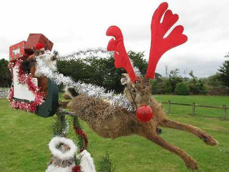 ROADKILL: The artwork features Santa (a stuffed possum) in a sleigh pulled by a dead hare disguised as a reindeer.