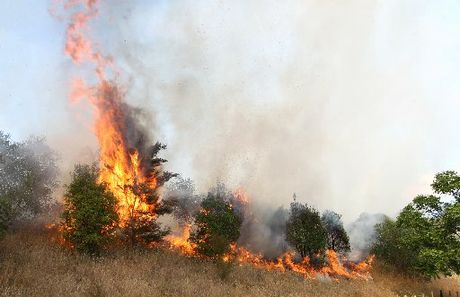 HAVELOCK HEAT: Homeowners were forced to battle a fierce fire that scorched four hectares of long grass and came within 30m of several houses on Havelock North's Lane Rd yesterday.