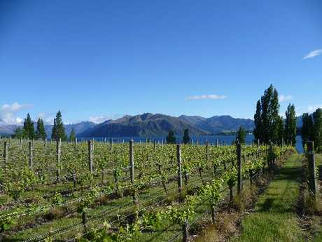 PEACE PREVAILS: Rippon Vineyard.