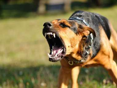 Ergon Energy says there has been a slight reduction in dog attacks from 68 in 2012 to 65 in 2013.