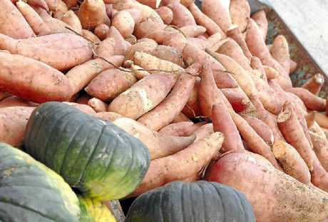 Cheap vegetable imports are hindering future business viability of local farms. 