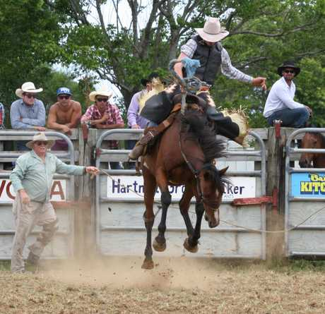 HEAD DOWN BUM UP: Daniel McCready goes to work in the open saddlebronc division at the Kaitaia rodeo where his progress is watched with great interest by gatekeeper and father, Bill McCready. Daniel took third in the event and second in steer wrestling.