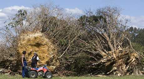 WILD WINDS: A tornado ripped through the region early last month leaving a trail of destruction, including damage to this Hamurana farm where a large tree was toppled.