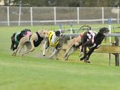 THERE'S high drama leading into tomorrow night's City of Ipswich Gold Cup final.